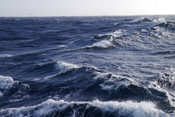 New Zealand waters