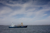 Blue Mussel Fishery Schleswig-Holstein