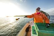 Fisher Anna Vesper Gunnarsson fishing pikeperch in Lake Hjälmaren in Sweden