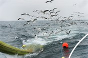 Dutch CVO sole and plaice fishing photoshoot June 2013