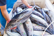 Walker Seafoods Australia, Video Shoot