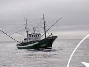 North Atlantic albacore fishery of Cantabrian fleet