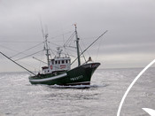 North Atlantic albacore fishery of Cantabrian fleet
