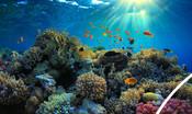 Underwater image