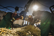Three fishermen repairing net south african Hake fishery