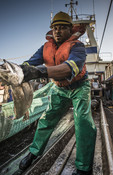 Throwing fish south african Hake fishery
