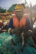 holding fish south african Hake fishery