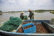 Crayfish fishery China GFSF 2017 winner