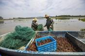 Crayfish fishery China GFSF 2017 winner