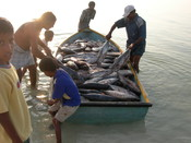Tuna and baitfish fishery India GFSF 2017 winner