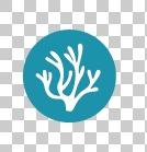 Graphics - ASC-MSC Seaweed Standard