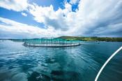 Photo ASC saumon élevage