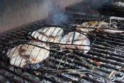 Grilled hake