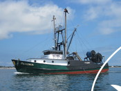 Squid Fishery