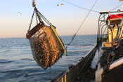 Mussels in Netherlands