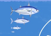 Tuna generation illustration