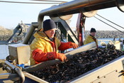 Mussel fishery in the Netherlands
