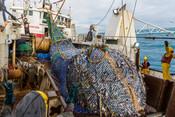 Fishing for NZ hoki on the Sealord Otakou trawler