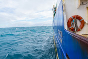 Fishing for NZ hoki on the Sealord Otakou trawler