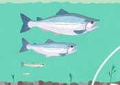 Fish generation illustration marketing