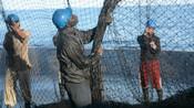 Tuna fishermen pulling nets