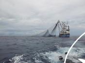Purse seine tuna fishing boat