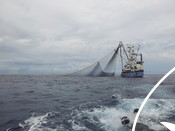 Purse seine tuna fishing boat